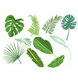 leaves set various plants vector image