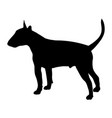 bull terrier silhouette vector image vector image