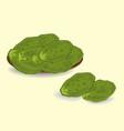 edible green cactus leaves or nopales hand drawn vector image vector image