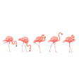 pink flamingo bird set tropical wild beautiful vector image