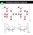 Cellulose polymer vector image vector image