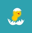 chick and shell egg isolated small chicken little vector image