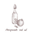 drawing pomegranate seed oil vector image