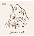 Savannah cat vector image vector image