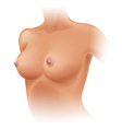 Human Breast vector image vector image