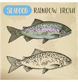 rainbow trout sketch or coastal redband fish vector image