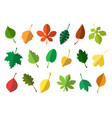 simple autumn leaves vector image