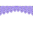 violet blue wisteria isolated on white background vector image vector image