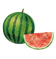 watercolor watermelons isolate on a white bkg vector image vector image