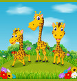 beautiful view with three giraffe vector image vector image