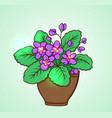 blooming violets in a flowerpot vector image vector image