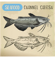 channel catfish sketch seafood and fish vector image