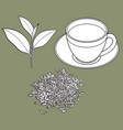 green tea cup fresh and dry leaves vector image vector image