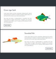 green tiger barb swordtail fish isolated on white vector image vector image