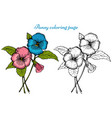 pansy flower coloring page vector image vector image