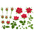 set decorative red roses vector image vector image