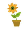 sunflower in vase cute kawaii cartoon vector image vector image