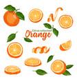 color set of hand drawn tropical citrus fruit vector image