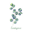 eucalyptus leaves and branch blue green isolated vector image vector image