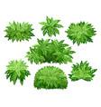 nature garden natural bushes vector image