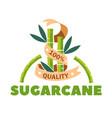 organic sugar product sugarcane sweetener isolated vector image