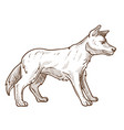 wild dog dingo breed isolated sketch australian vector image
