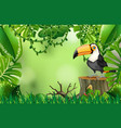 a toucan in nature green template vector image