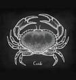 chalk sketch edible crab vector image