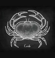 chalk sketch of edible crab vector image vector image