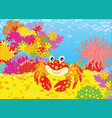 crab and corals vector image