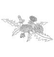 dandelions doodle vector image