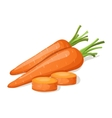 Carrot isolated on white vector image