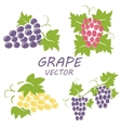 flat grape icons set vector image vector image
