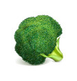 green broccoli icon realistic style vector image vector image