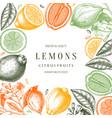 ink hand drawn citrus fruits frame design lemons vector image