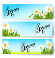 spring nature background daffodil flowers vector image vector image
