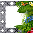 tropical leaves with white frame paper vector image vector image