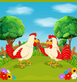 two big cock talking on the green grass vector image