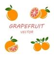 flat grapefruit icons set vector image