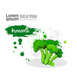 broccoli hand drawn watercolor vegetable on white vector image