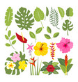 set of tropical flowers and leaves vector image vector image