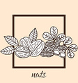 hand drawn nuts vector image