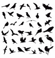 collection bird silhouettes vector image vector image