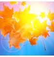 Delicate autumn sun with glare on blue sky vector image vector image