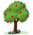 isolated apple tree on white background vector image