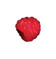 ripe realistic raspberry vector image