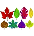 Set of colorful abstract leaves isolated vector image vector image