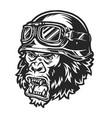 vintage ferocious gorilla biker head vector image vector image