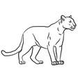wild puma vector image