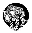 black and white silhouette a leopard in a black vector image vector image
